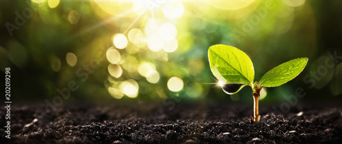Foto op Canvas Planten Young Plant in Sunlight