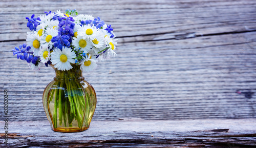 Foto op Canvas Madeliefjes Daisies, forget-me-not and grape hyacinth - greeting card