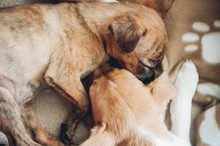 Two Beautiful Puppies Sleeping...