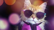Beautiful Cat With Sunglasses