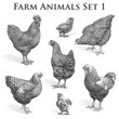 Vector Farm Animals engraving. Chickens and Roosters