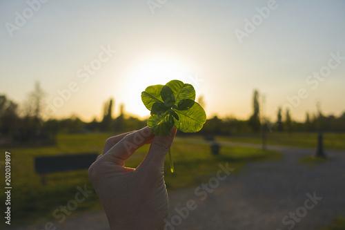 mano quadrifoglio parco luce tramonto