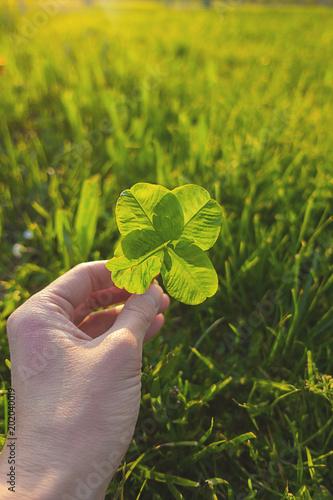 mano quadrifoglio prato verde