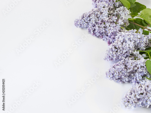 Foto op Canvas Bloemen Light purple lilac branches on white background