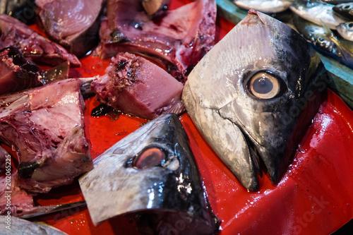 Foto  pesce