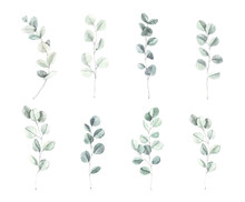 Watercolor Illustration. Botanical Eucalyptus Leaves And Branches. Herbal Collection. Floral Design Elements. Perfect For Wedding Invitations, Greeting Cards, Blogs, Posters And More