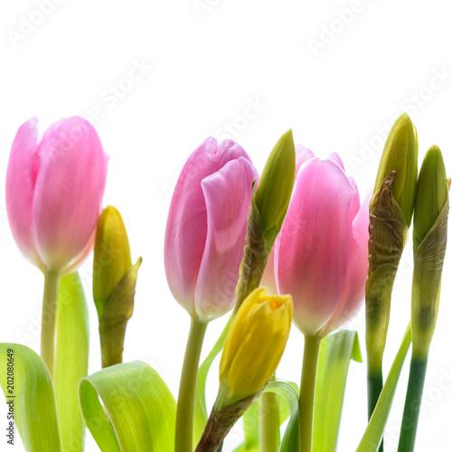 Foto op Plexiglas Tulp Tulpen und Osterglocken