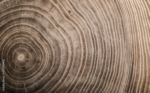 Tuinposter Natuur Stump of tree felled - section of the trunk with annual rings. Slice wood.