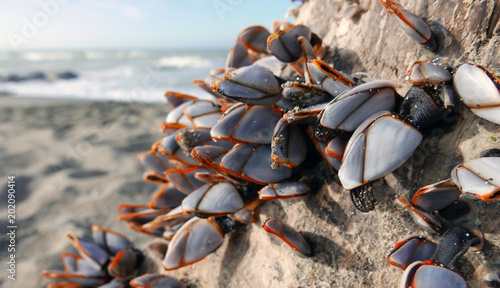 bivalve colony close up Wallpaper Mural