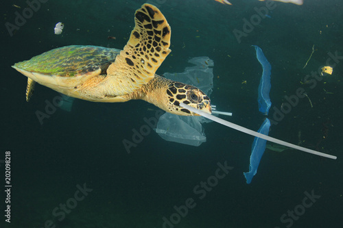 Poster Tortue Plastic garbage dumped in ocean. Threats to marine life. Sea Turtle eats straws and bags, mistaking them for food