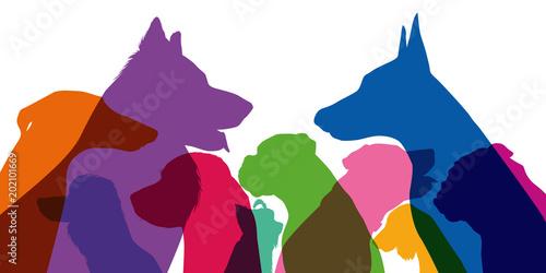 Fotografie, Obraz  chien - tête - silhouette - profil - race - espèce -animal de compagnie - vue de