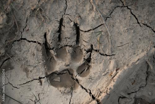 Türaufkleber Darknightsky Trittsiegel eines großen Hundes oder von einem Wolf