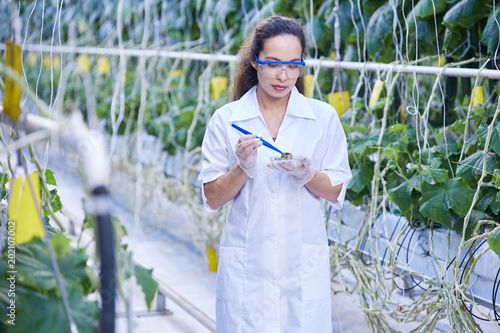 Tablou Canvas Portrait of young female scientist checking quality of vegetables taking probes
