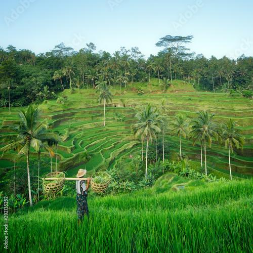 Fotobehang Rijstvelden Bali rizière en terrasse, Ubud, Bali