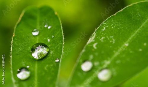 Foto auf Leinwand Wasserfalle Colorful macro photo of water rain dew drops on a plant with green leaves on a sunny summer day. Ecology, nature, environment, and photography concept