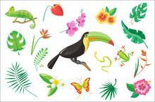 Set Of Tropical Summer Elements, Flowers, Toucan, Palm Leaves, Frog, Snake, Chameleon Vector Illustration On A White Background