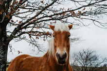 Close-up Of Flaxen Horse Standing Against Tree
