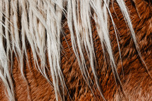 Close-up Chestnut Horse Mane