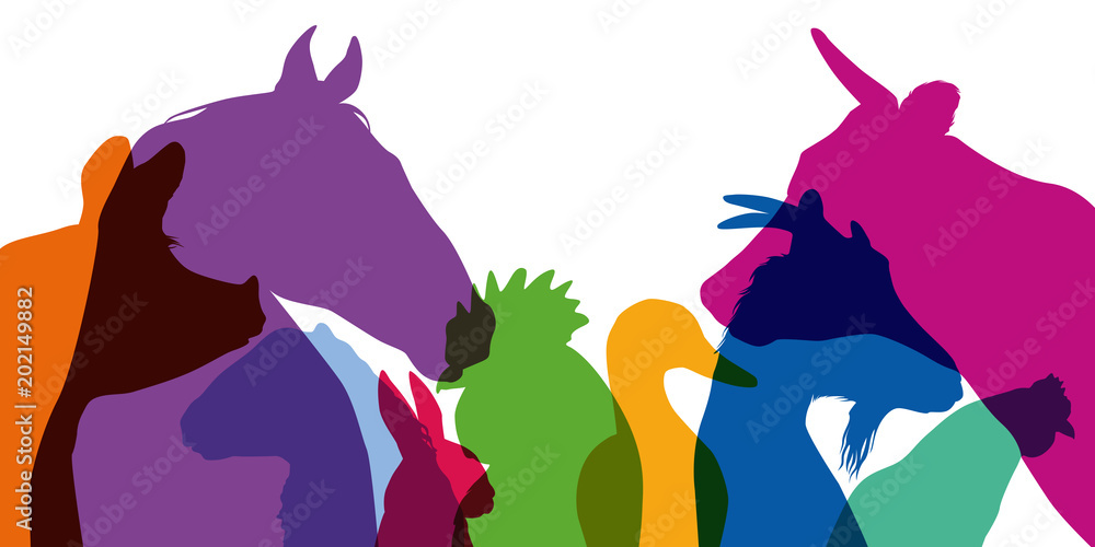 Fototapeta animal de la ferme - ferme - tête - silhouette - animal - profil - agricole - cochon - coq - poule