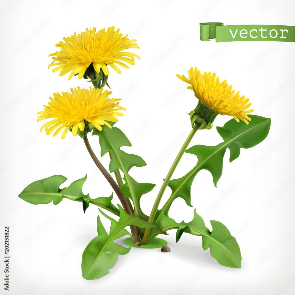 Dandelion kwiaty, 3d ikona wektor