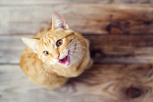Beautiful Red Kitten On A Wooden Surface Close Up, Top View