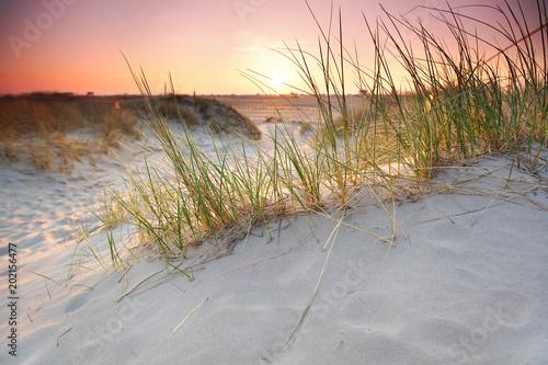 Poster Gris Abendlicht an der Sanddüne