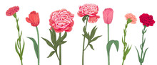 Set Of Red, Pink Spring Garden Flowers: Carnation, Peony, Tulip On White Background. Horizontal Hand Draw Illustrations For Design, Engraving Vintage Sketch Style, Botanical Vector. Panoramic View