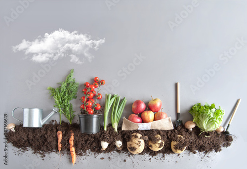 Printed kitchen splashbacks Vegetables Fruit and vegetable garden