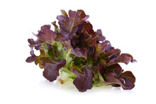 Red Oak Leaf Lettuce On A Whit...
