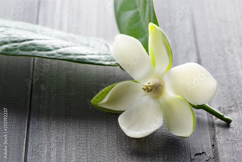 Foto op Plexiglas Magnolia White magnolia flower on dark wooden.