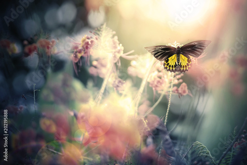 Fotografia  Black and yellow butterfly with rim lighting effect