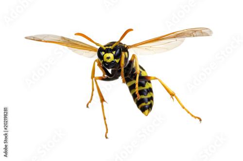 Valokuvatapetti wasp isolated on white