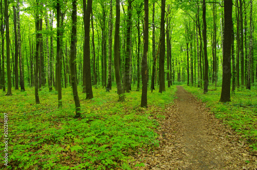 Forest trees in spring #202214097