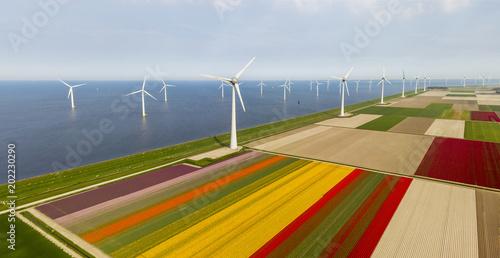 Aerial view of tulip fields and wind turbines in the Noordoostpolder municipality, Flevoland