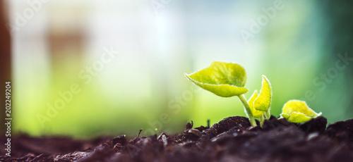 Fotobehang Planten Young Plant Growing In Sunlight