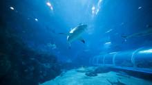 Shark Swimming In S.E.A. Aquar...