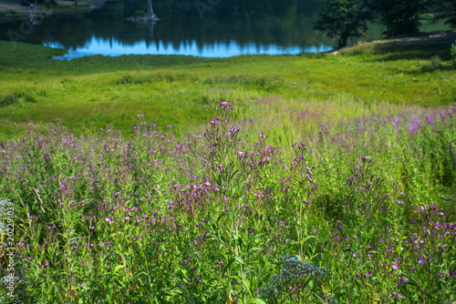 Fotografie, Obraz  Prato fiorito - Lago -Montagna