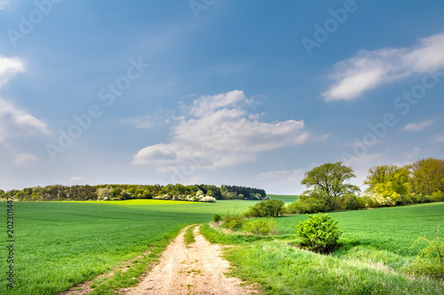Tuinposter Blauwe jeans Dirt road through spring landscape with green meadow