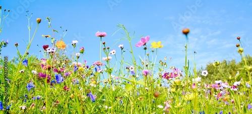 Foto op Aluminium Bloemenwinkel Blumenwiese - Hintergrund Panorama - Wildblumen Wiese