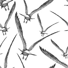 Pattern Of The Seagulls Flying...
