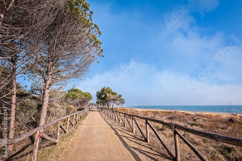 Foto op Plexiglas Zalm Marine landscape with tree and trail. Cycle and pedestrian path. Bibione Italy
