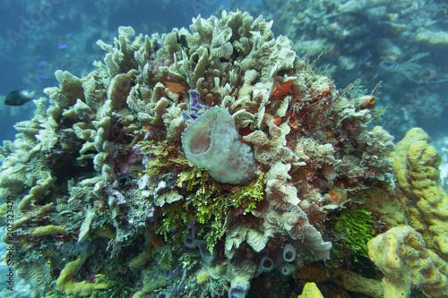 Tuinposter Koraalriffen Koralle, Korallenriff, Riff, Cozumel, Yucatan, Mexiko, Tauchen, Unterwasser