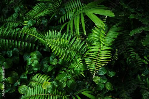 Photo  Tropical green leaf