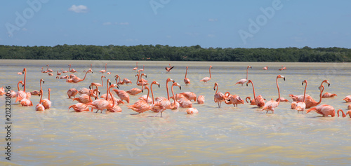 Flamingos, Vögel, Celestun, Wasser, Celestún, Yucatan, Mexiko