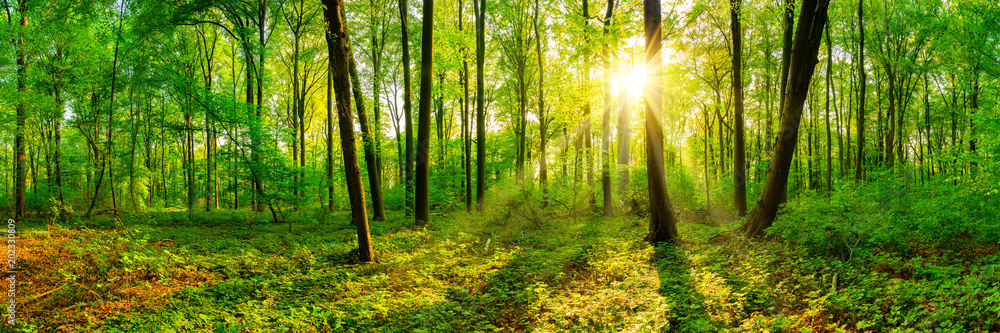 Beautiful forest panorama in spring with bright sun