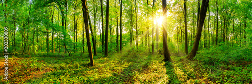 Papiers peints Forets Beautiful forest panorama in spring with bright sun