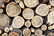 Background From The Ends Of Round Logs Of Wood Of Different Diameters