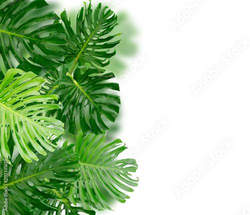 Tropical green leaves Wall mural