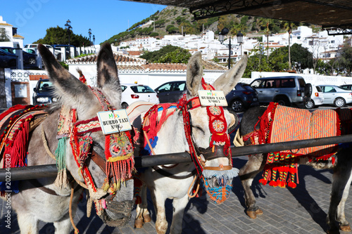 Photo Donkey taxis lined up in Mijas Pueblo