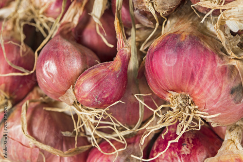 Foto op Plexiglas Retro Close up group of shallots.Dry of ingredient.